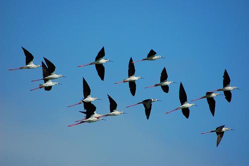 Gambar Animasi Burung Terbang Bergerak