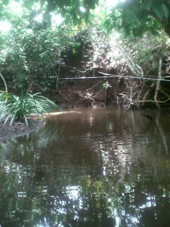 Sungai Kecil di sekitar Tahura Sultan Adam