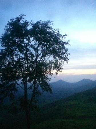 Pohon dilereng bukit berbatu