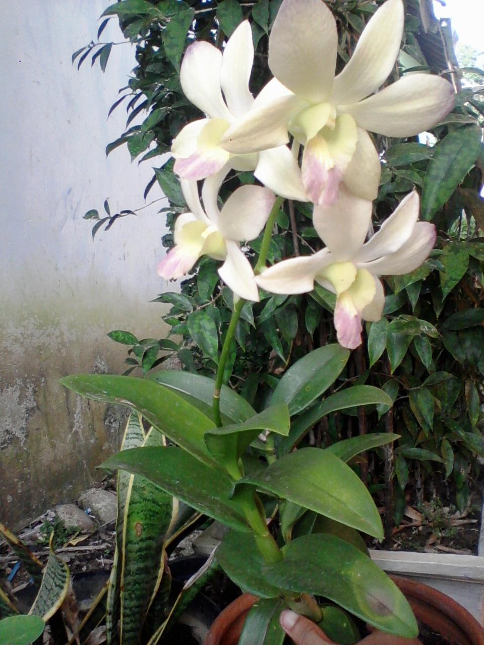 Gambar Bunga Warna Warni Gambar V